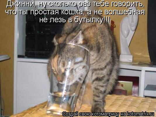 Котоматрица: Джинни, ну сколько раз тебе говорить, что ты простая кошка,а не волшебная - не лезь в бутылку! Джинни, ну сколько раз тебе говорить, что ты про