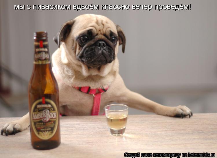 Котоматрица: мы с пивасиком вдвоём классно вечер проведём!