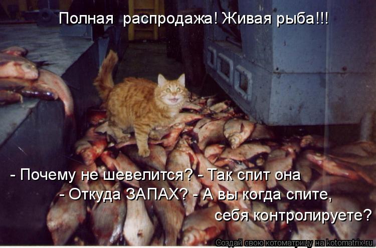 Котоматрица: Полная  распродажа! Живая рыба!!! - Почему не шевелится? - Так спит она - Откуда ЗАПАХ? - А вы когда спите,  себя контролируете?