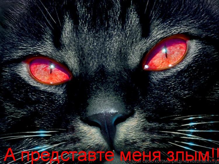 Котоматрица: А представте меня злым!!! А представте меня злым!!!