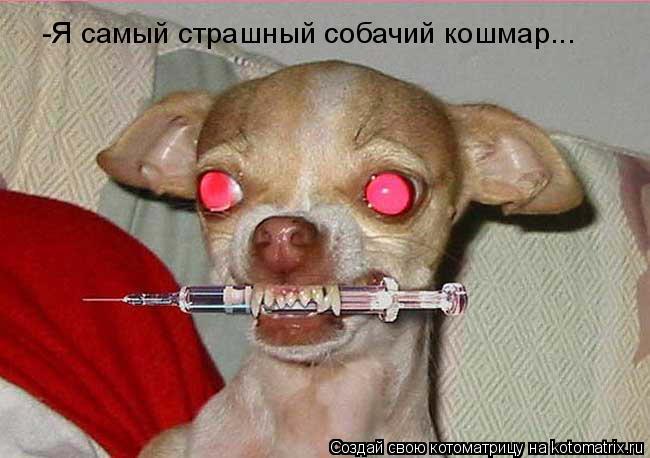 Котоматрица: -Я самый страшный собачий кошмар...