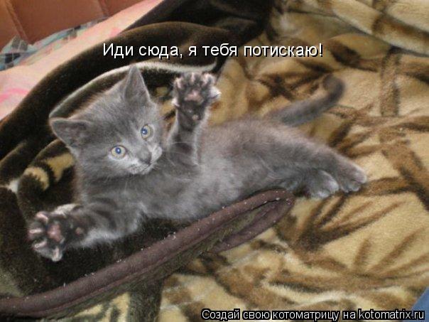 Котоматрица: Иди сюда, я тебя потискаю!