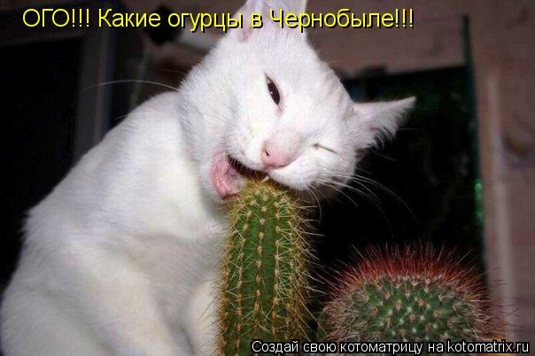 Котоматрица: ОГО!!! Какие огурцы в Чернобыле!!!