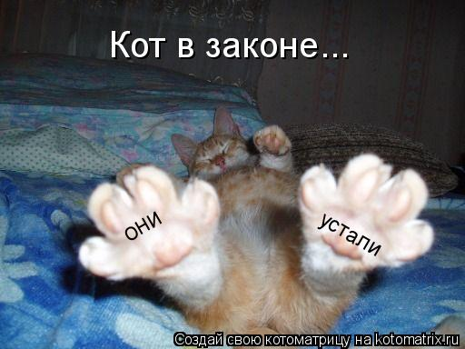 Котоматрица: они устали Кот в законе...