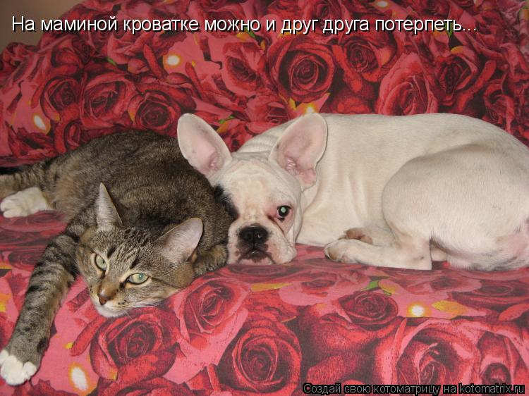 Котоматрица: На маминой кроватке можно и друг друга потерпеть...