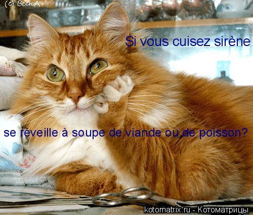 Котоматрица: Si vous cuisez sirène se réveille à soupe de viande ou de poisson?
