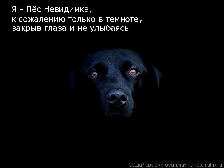 Котоматрица: Я - Пёс Невидимка, к сожалению только в темноте , закрыв глаза и не улыбаясь БУ
