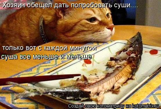 Котоматрица: Хозяин обещел дать попробовать суши.... только вот с каждой минутой  суша все меньше и меньше суша все меньше и меньше