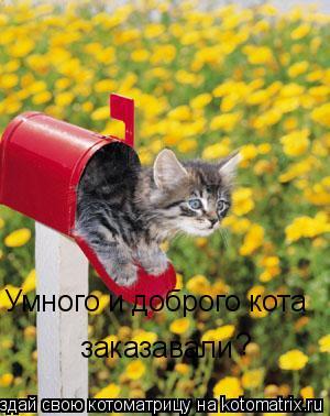 Котоматрица: Умного и доброго кота  заказавали ?