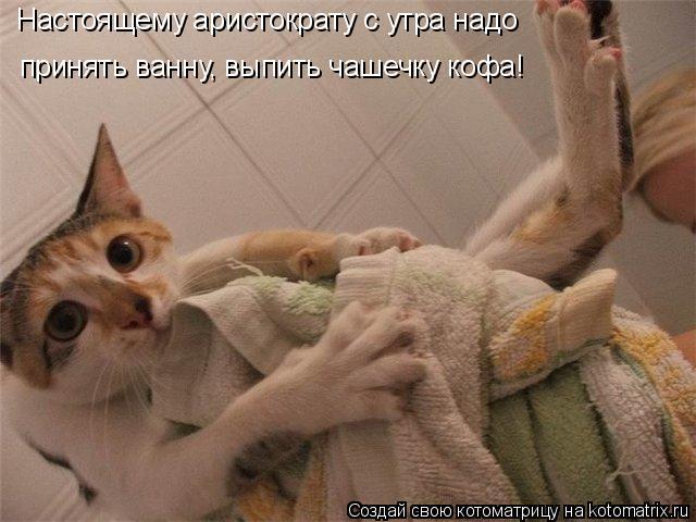 Котоматрица: Настоящему аристократу с утра надо  принять ванну, выпить чашечку кофа!
