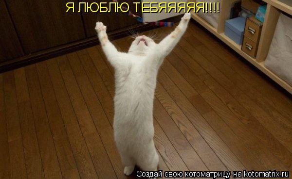 Котоматрица: Я ЛЮБЛЮ ТЕБЯЯЯЯЯ!!!!