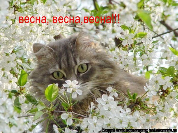 Котоматрица: весна, весна,весна!!!