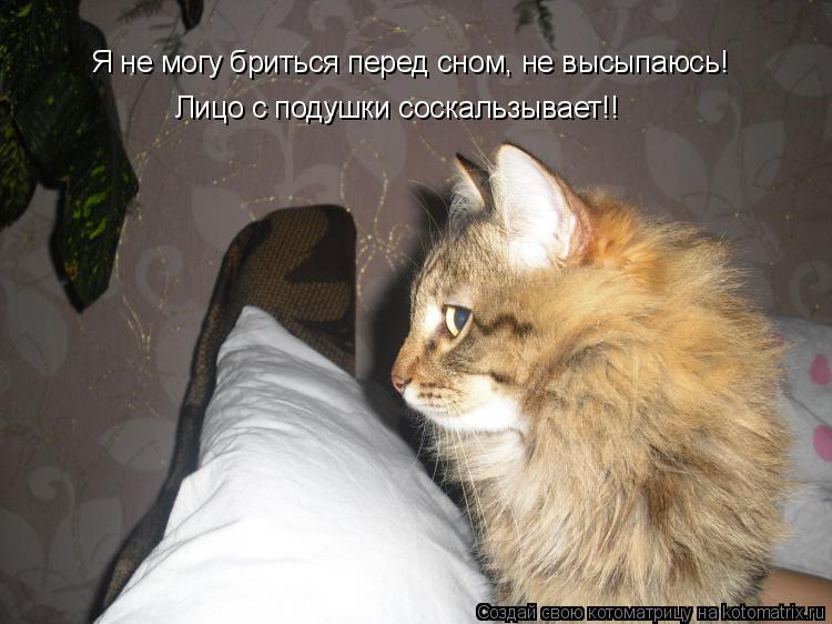 Котоматрица: Я не могу бриться перед сном, не высыпаюсь! Лицо с подушки соскальзывает!!