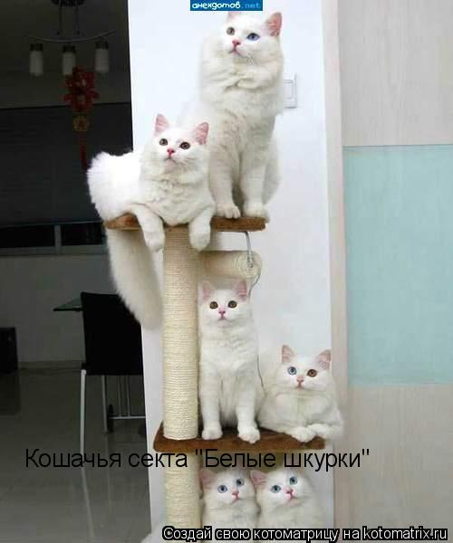 "Котоматрица: Кошачья секта ""Белые шкурки"""