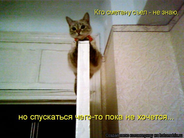 Котоматрица: Кто сметану съел - не знаю, но спускаться чего-то пока не хочется...
