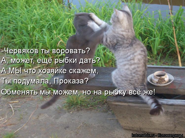 Котоматрица: -Червяков ты воровать? А, может, ещё рыбки дать? А МЫ что хозяйке скажем, Ты подумала, Проказа? Обменять мы можем, но на рыбку всё же!