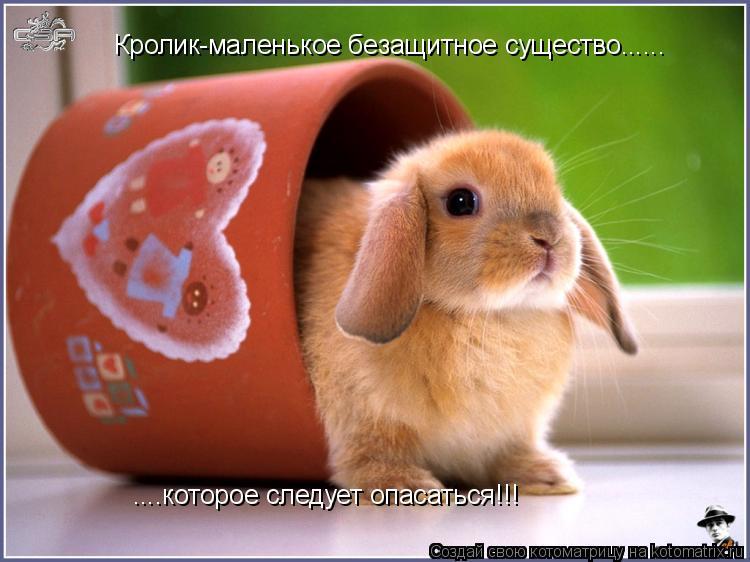 Котоматрица: ....которое следует опасаться!!! Кролик-маленькое безащитное существо......