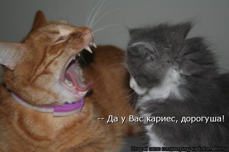 Котоматрица: -- Да у Вас кариес, дорогуша!