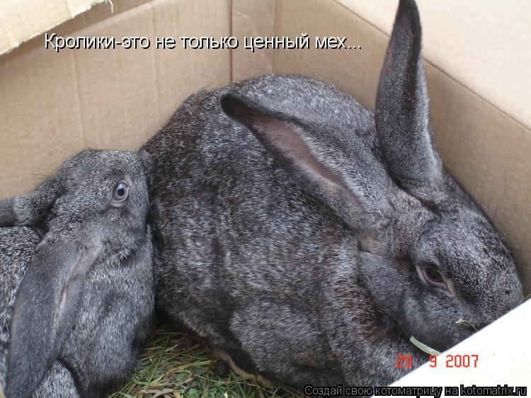 Котоматрица: Кролики-это не только ценный мех...