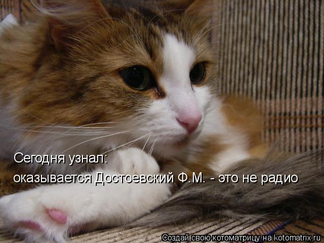 Котоматрица: оказывается Достоевский Ф.М. - это не радио Сегодня узнал: