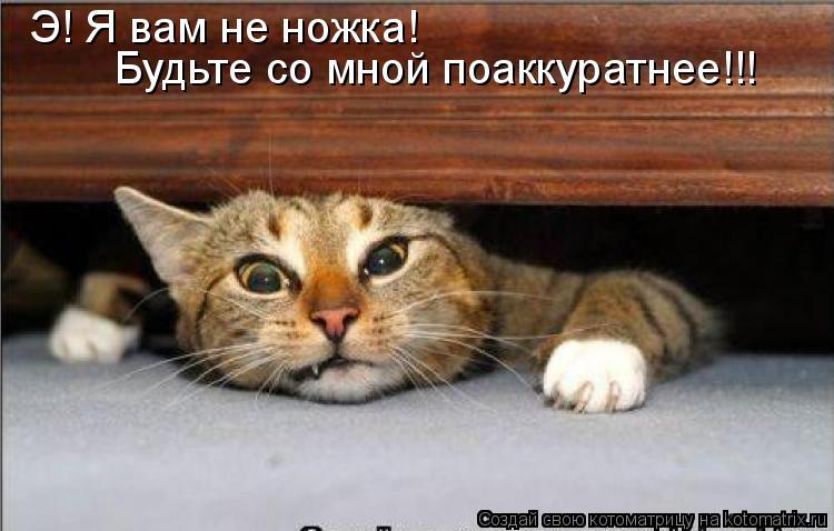 Котоматрица: Э! Я вам не ножка! Будьте со мной поаккуратнее!!!
