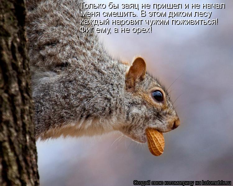 Котоматрица: Только бы заяц не пришел и не начал меня смешить. В этом диком лесу каждый наровит чужим поживиться! Фиг ему, а не орех!
