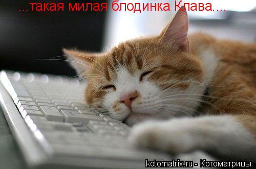 Котоматрица: ...такая милая блодинка Клава....