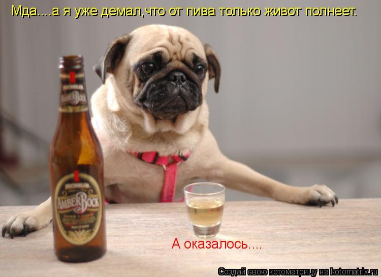 Котоматрица: Мда....а я уже демал,что от пива только живот полнеет. А оказалось....