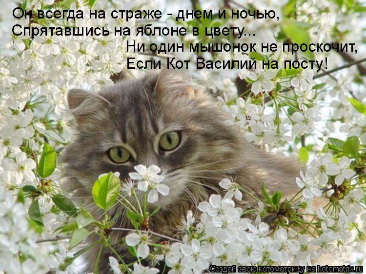 Котоматрица: Он всегда на страже - днем и ночью, Спрятавшись на яблоне в цвету... Ни один мышонок не проскочит, Если Кот Василий на посту!