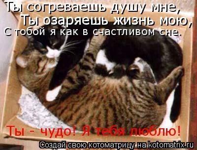 Котоматрица: Ты согреваешь душу мне,  Ты озаряешь жизнь мою,  Ты озаряешь жизнь мою,  С тобой я как в счастливом сне. Ты - чудо! Я тебя люблю!