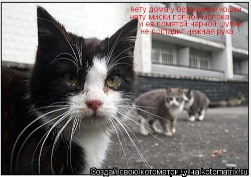 Котоматрица: нету дома у бездомной кошки нету миски полной молока и её помятой черной шубки не погладит нежная рука.
