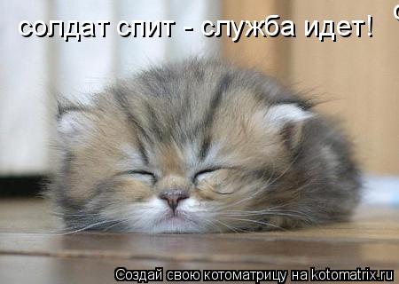 Котоматрица: солдат спит - служба идет! солдат спит - служба идет!