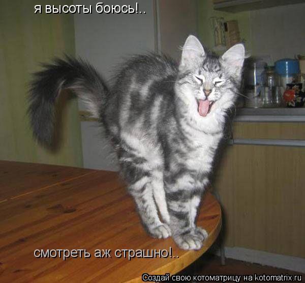 Котоматрица: я высоты боюсь!.. смотреть аж страшно!..