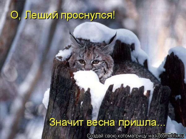 Котоматрица: О, Леший проснулся! Значит весна пришла...