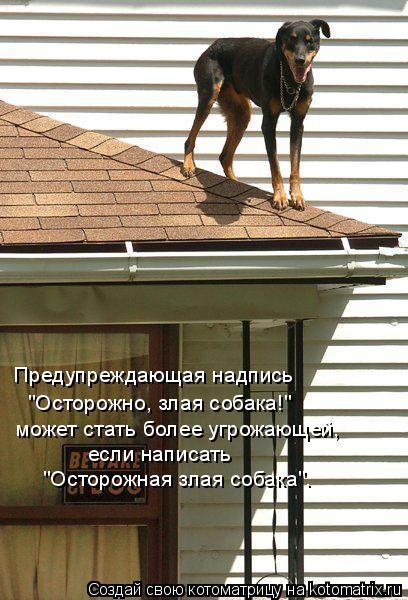 """Котоматрица: Предупреждающая надпись   """"Осторожно, злая собака!"""" может стать более угрожающей, если написать   """"Осторожная злая собака""""."""