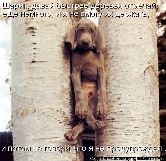 Котоматрица: Шарик, давай быстрее деревья отмечай, еще немного, и я не смогу их держать,  и потом не говори, что я не предупреждал....