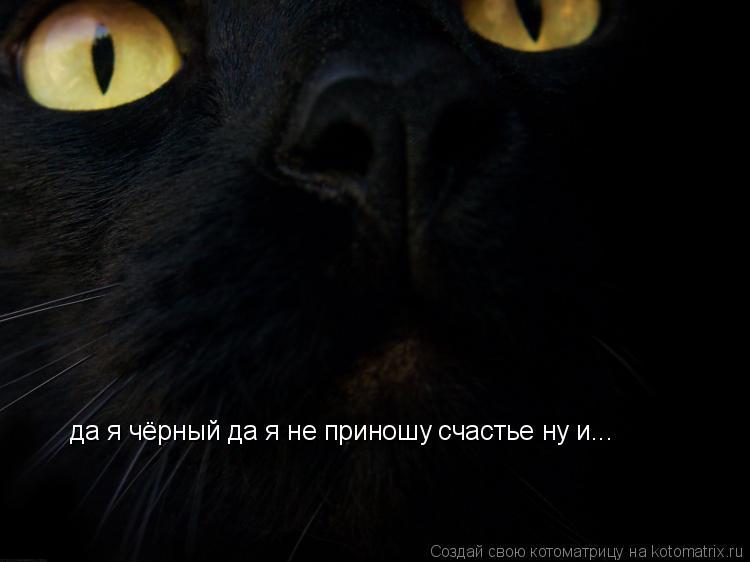 Котоматрица: да я чёрный да я не приношу счастье ну и...