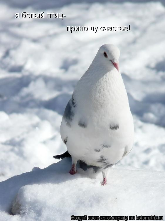 Котоматрица: я белый птиц- приношу счастье!