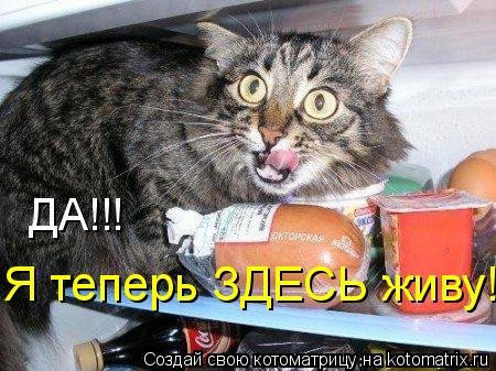 Котоматрица: ДА!!!  Я теперь ЗДЕСЬ живу!!!