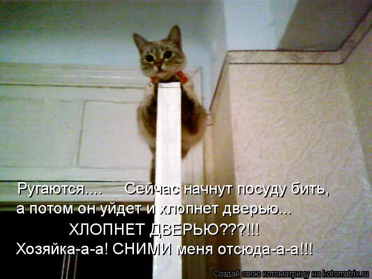 Котоматрица: Ругаются....     Сейчас начнут посуду бить, а потом он уйдет и хлопнет дверью... ХЛОПНЕТ ДВЕРЬЮ???!!! Хозяйка-а-а! СНИМИ меня отсюда-а-а!!!