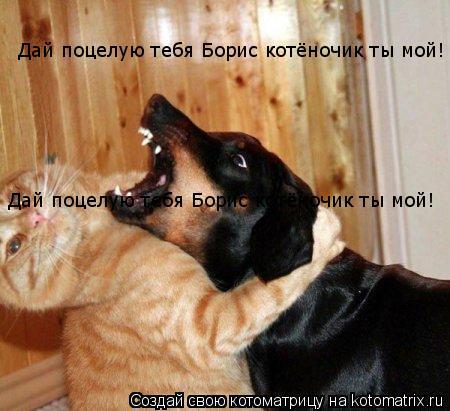Котоматрица: Дай поцелую тебя Борис котёночик ты мой! Дай поцелую тебя Борис котёночик ты мой!