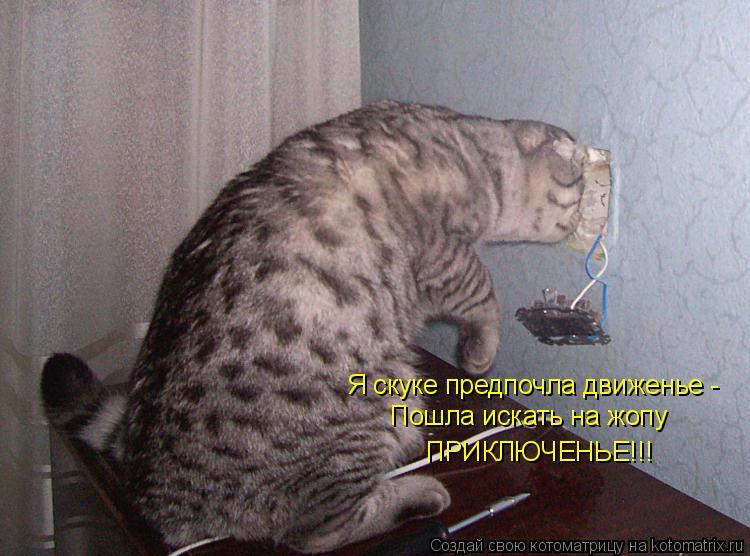 Котоматрица: Я скуке предпочла движенье - Пошла искать на жопу ПРИКЛЮЧЕНЬЕ!!!