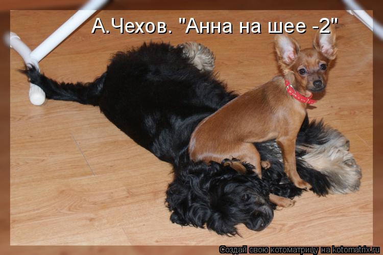 "Котоматрица: А.Чехов. ""Анна на шее -2"""