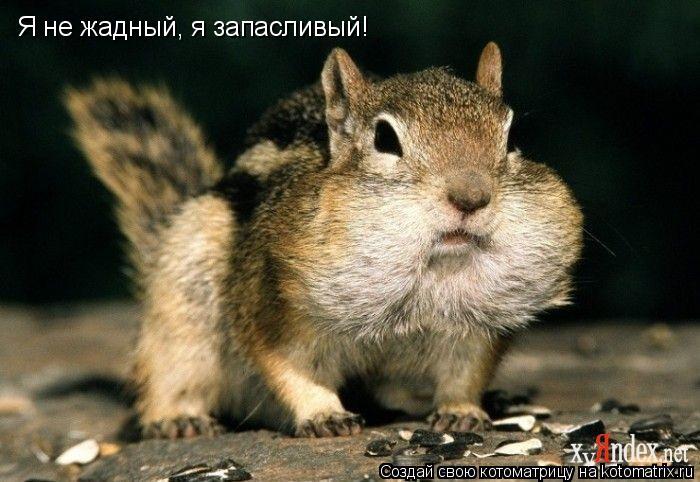 Котоматрица: Я не жадный, я запасливый!