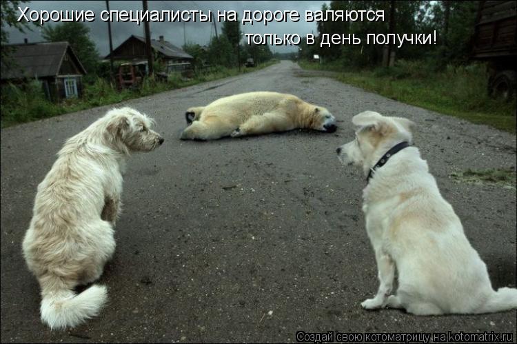 Котоматрица: Хорошие специалисты на дороге валяются только в день получки!