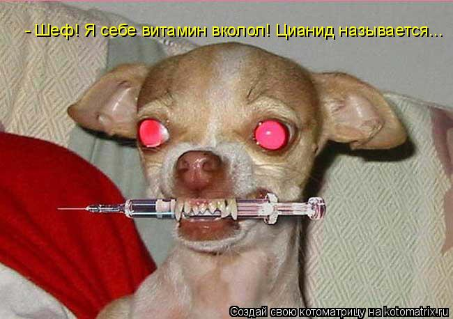 Котоматрица: - Шеф! Я себе витамин вколол! Цианид называется...