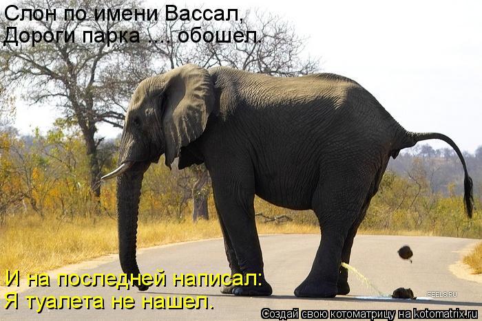 Котоматрица: Слон по имени Вассал, Дороги парка .... обошел. И на последней написал: Я туалета не нашел.