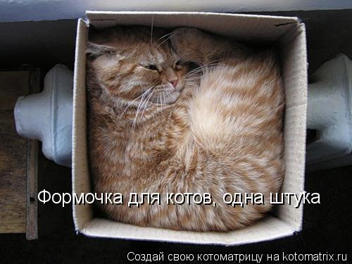 Котоматрица: Формочка для котов, одна штука