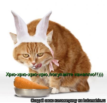 Котоматрица: Хрю-хрю-хрю-хрю,покупайте канаплю!!)))