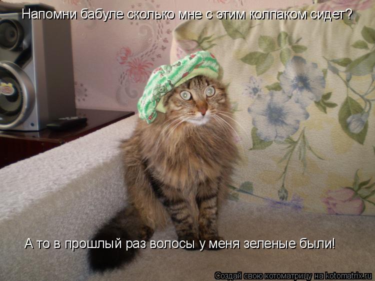 Котоматрица: Напомни бабуле сколько мне с этим колпаком сидет? А то в прошлый раз волосы у меня зеленые были!